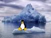 tux on ice